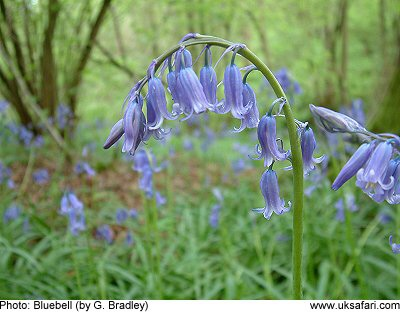 Are you ready for the Bluebell Bonnet Parade in Whimsy Wood this May?!
